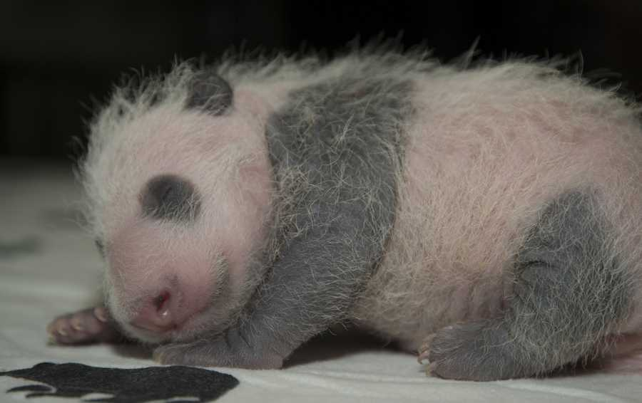 The cub is the survivor of a set of twins. The other cub died four days after it was born.