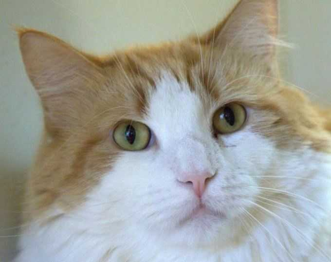 3-year-old male Dallas is awaiting adoption at the MSPCA-Angell in Boston. MORE