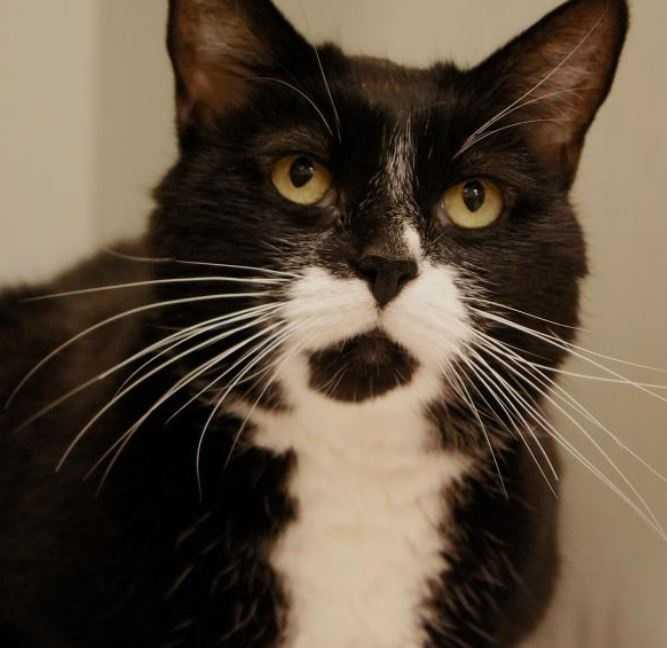 7-year-old female Goober is awaiting adoption at the MSPCA-Angell in Boston. MORE