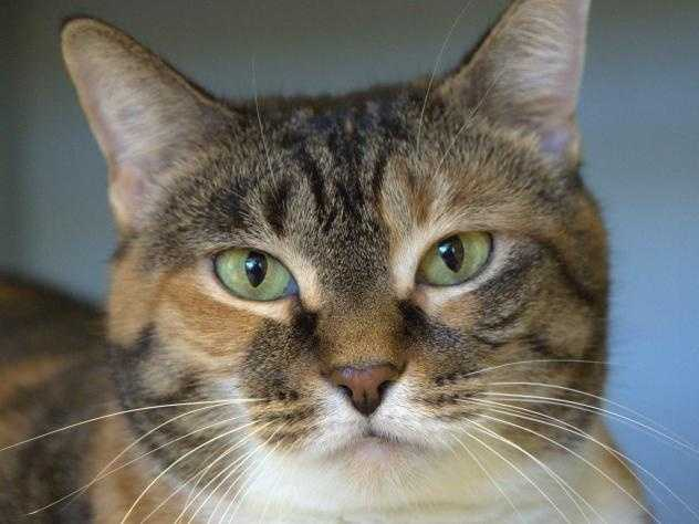 The MSPCA is waiving adoption fees at all of its adoption centers this weekend for all cats a year and older. Meet some of the cats looking for a new home!