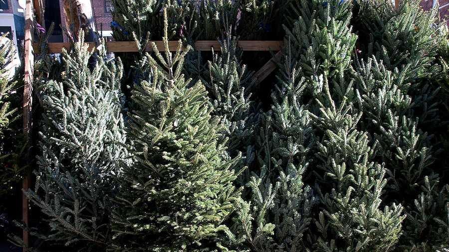Keep Your Christmas Tree Fresh