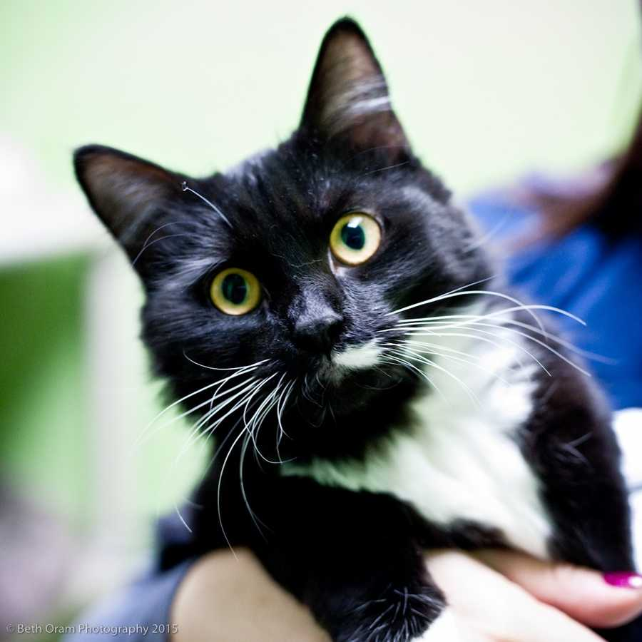 Check out some of these adorable furry pals looking for new homes at Baypath Humane Society!