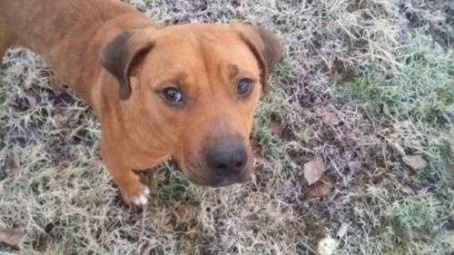 Lulu Lemon is a 2 year old Hound Shepherd. She does well with dogs but should be suited with a medium to high energy dogs. Her favorited times of day is breakfast and dinner time. Lulu Lemon is a sweet dog looking for a home that can love her unconditionally. More
