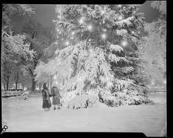 1934-1956 (approximate): Christmas lights on a snowy tree.