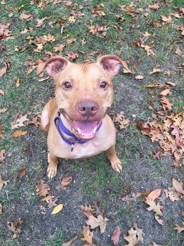 My name is Buddy and I am a 12 year-old, but I don't act like it! I like to play, chase tennis balls, and show you how well I can sit. I would really like to hang out on the couch with you and give you lots of kisses and cuddles. Sometimes I get so excited with people that I jump on them, but I know that this is a little naughty so I try not to do that - especially if there's cheese involved! I have been pretty sad looking for my dad, who died recently and was my best friend, and cry sometimes because I miss him so much. Click here