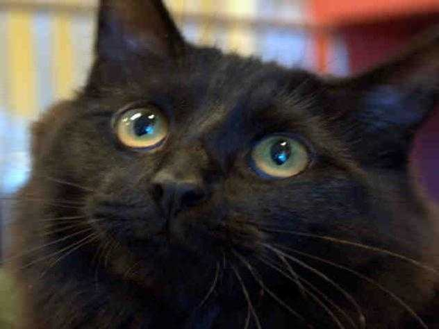 I'm Epi! Click here to find out more about me!