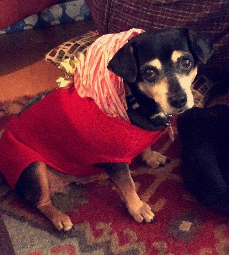Lulu - Dachshund mix, 5 years, female, 20 lbs. Lulu is a low energy girl who loves to cuddle and watch tv. She likes dogs her own size and is good with older kids, she is looking for a loving home to grow old in. More