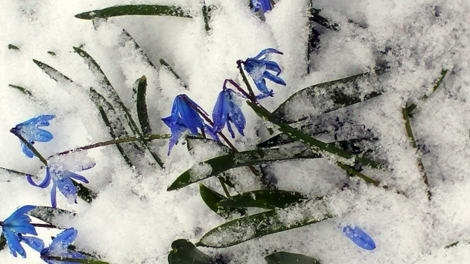 Snow covers the flowers in Lynn, MA