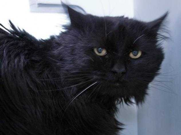 Hi! My name is MC Hammer! I am a very sweet, loving, caring young guy who is looking to find a home where I can be loved and cared for too. I was abandoned here by my old owner but don't feel bad because I know my best days are ahead of me! I am pretty nervous about people right off the bat, but if you take your time with me, you will see what a wonderful guy I am. I enjoy being scratched and petted on my head and under my chin and I don't even mind scratches on my bum, just as long as you are giving me some loving attention, I am great! MORE