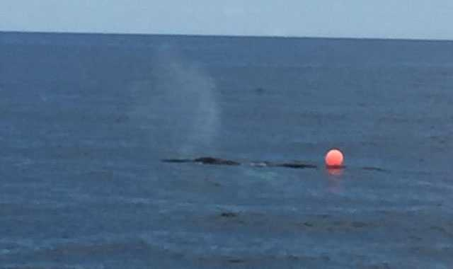 Crews are responding Wednesday to a report of an entangled whale off the Cape Ann coast, according to Massachusetts Environmental Police.
