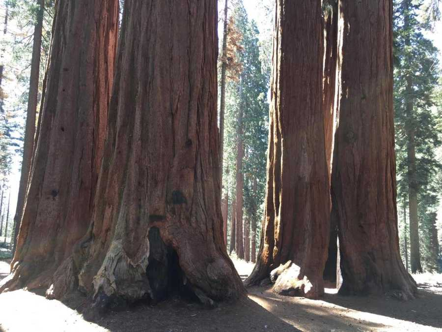 Sequoia and Kings Canyon National Park is located in California and has some of the largest trees in the world, and the deepest canyon in the U.S.