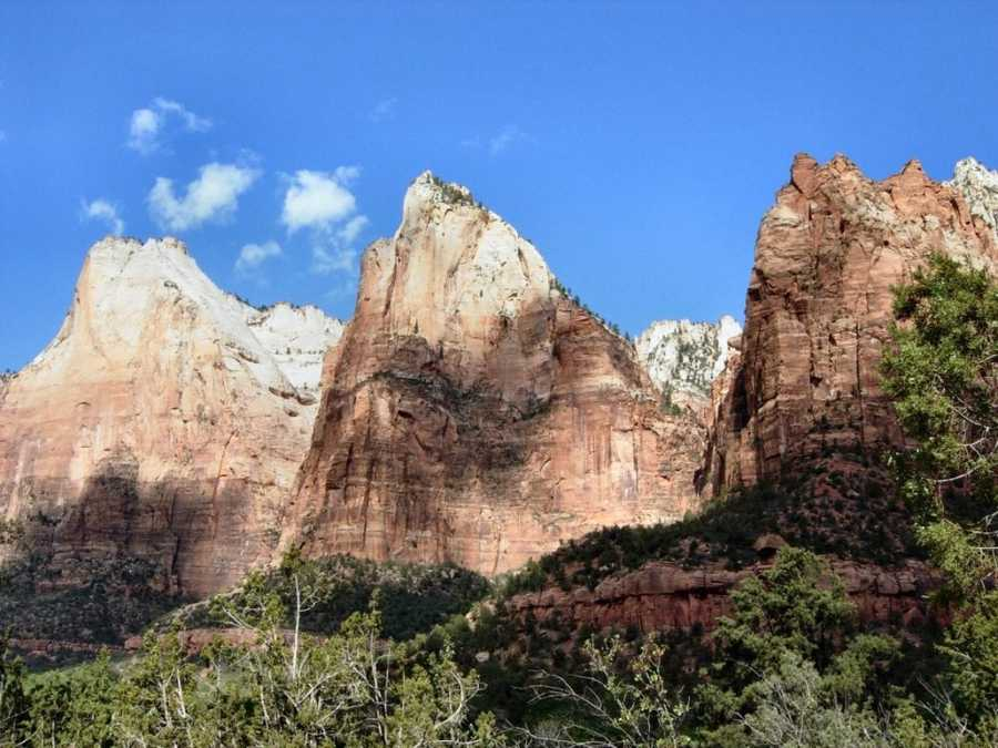 Zion National Park in Utah is home to a plethora of animals across its four unique life zones.