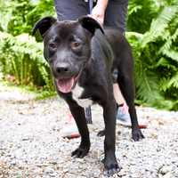 Toby is a handsome gentleman of a dog who is ready to grace your house with his presence. He is new to our shelter, and we are still learning about him, so please call for more info or come down and meet him today! More