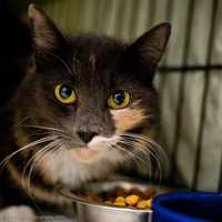 Meet Funfetti! This pretty girl is sweet as can be. She loves being with people and seems good with other cats. Since we havent seen her with kids, she would probably do best with teenagers. Come meet this sweetheart today! More