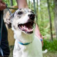 Kimmie is a fun, energetic girl who is ready for her forever home. She is looking for a quiet household where she can be the only dog. She is new to the shelter and we are still learning about her, so please call fore more info or come down and meet her today. More