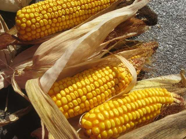 Corn on the cob without butter or salt is a high-fiber, low-calorie food that is a summer grill favorite.