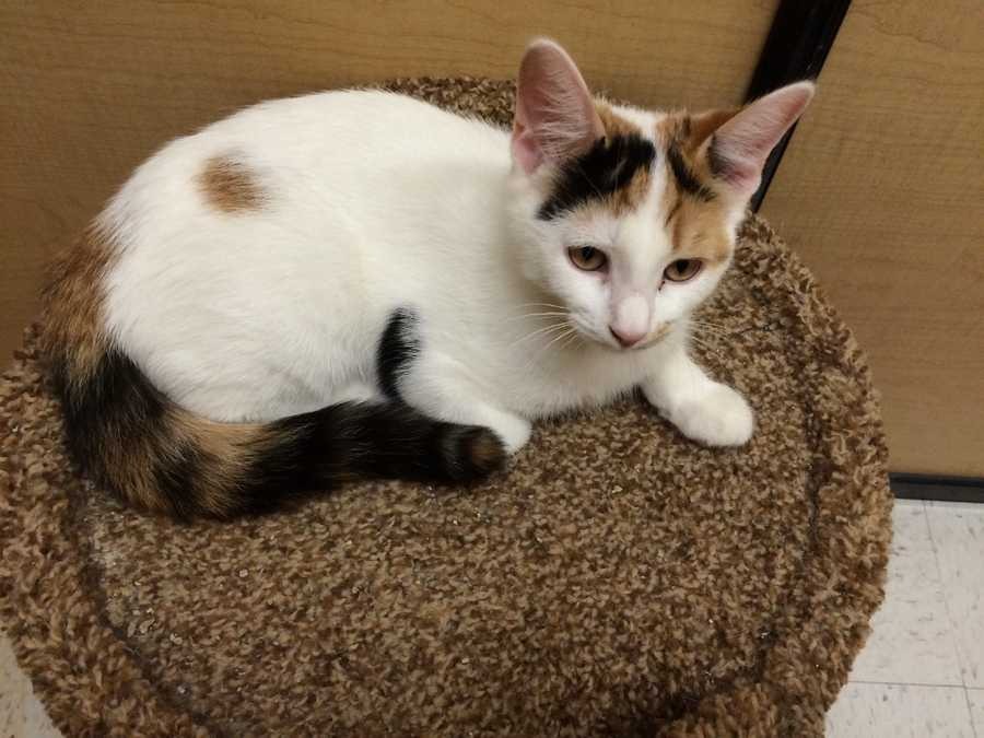Lily and Hearty are brother and sister, and are residing at Brockton Petsmart. They are four months old and very playful and energetic. They are looking for a home together! MORE
