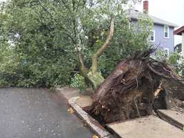 West Roxbury: Powerful storm moved through quickly, taking down this massive tree