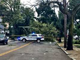 West Roxbury: Tree down at LaGrange & VFW Parkway.