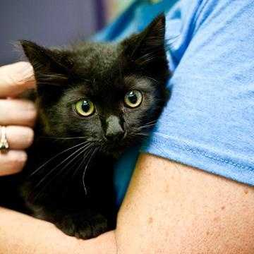 Sasha is an adorable little fluffball! We think she would like to go to a home with another cat, and with older, respectful kids. She is a little shy at first but does warm up. MORE