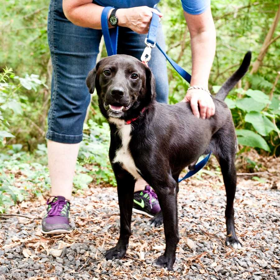 Anthony is a sweet guy who is pretty social and does well with other dogs. He is a very sensible sized dog...not too big and not too small! Come meet this handsome dog today! MORE