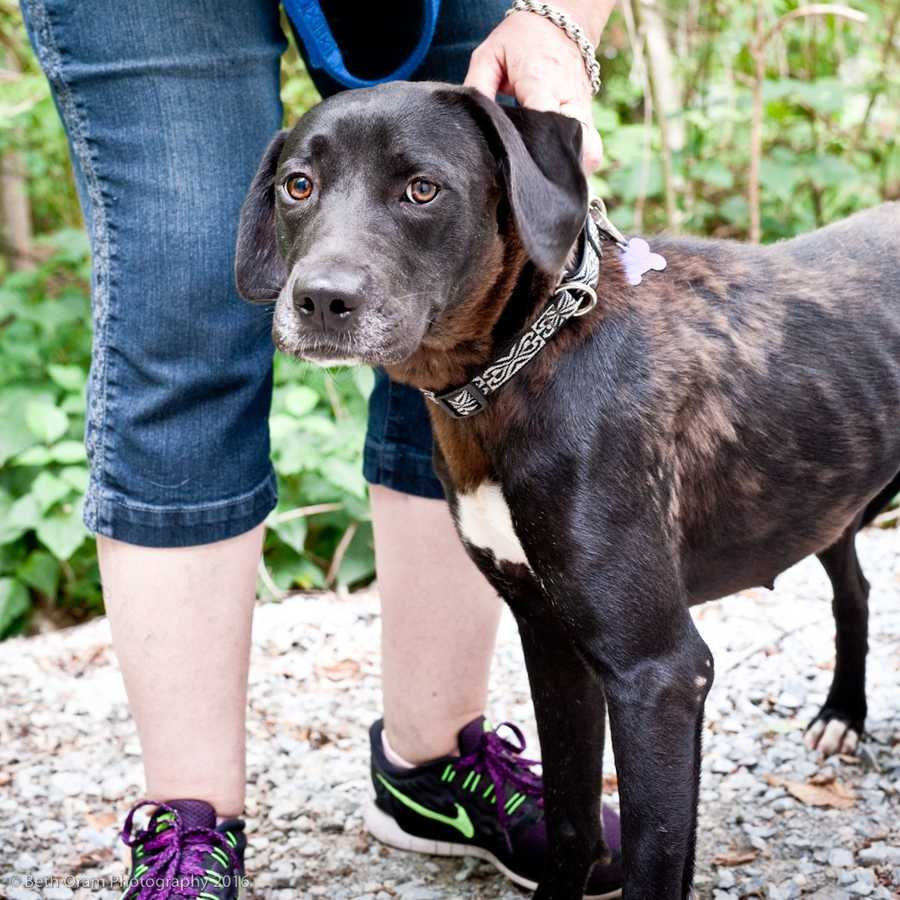 Sadie is a sweet young dog who is a little shy at first but warms up fairly quickly. She does well with other dogs. Sadie will do great with some obedience training. MORE