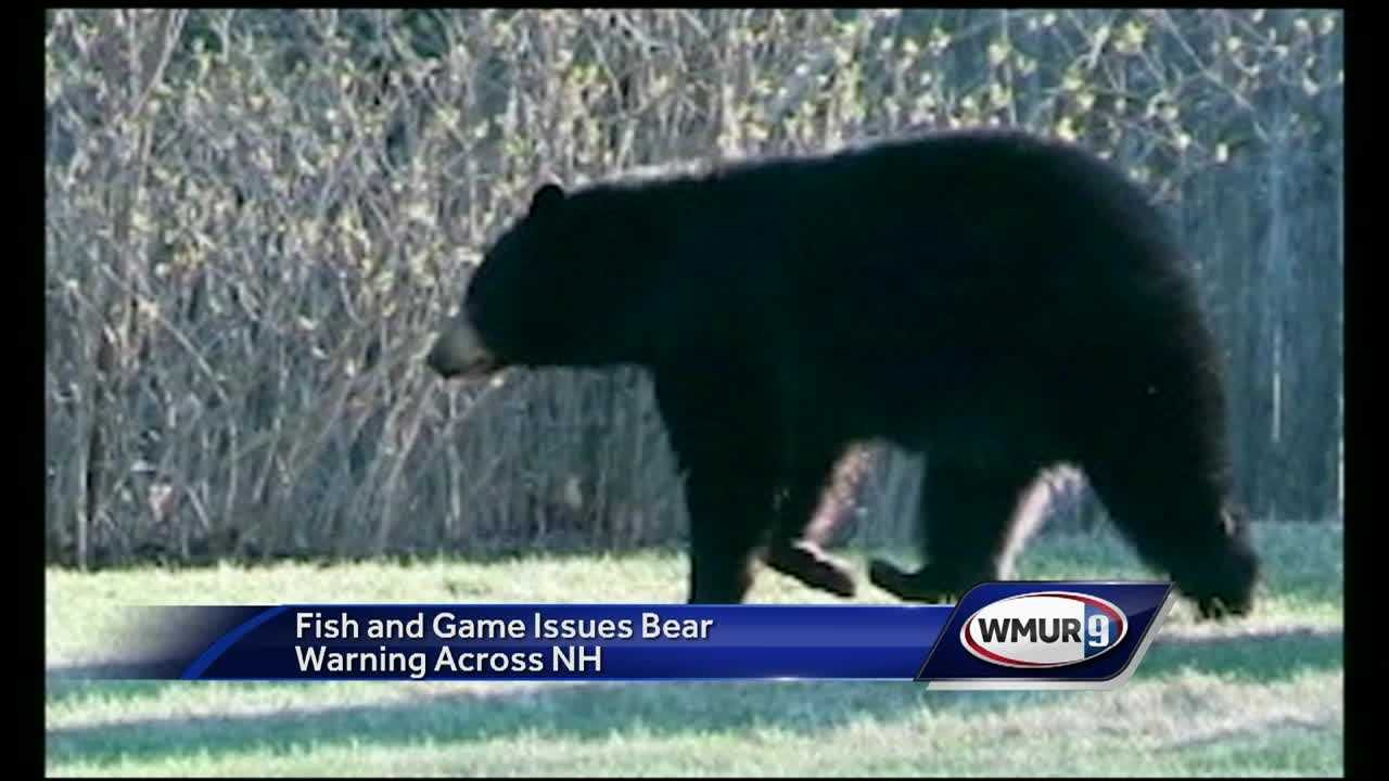 Fish and game is warning people in NH to look out for bears. The hot weather has dried up much of the bear's food supply and led to a rise in interactions with people.