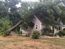Tree on house in Natick