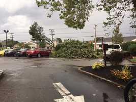 Trees down in Chelmsford.
