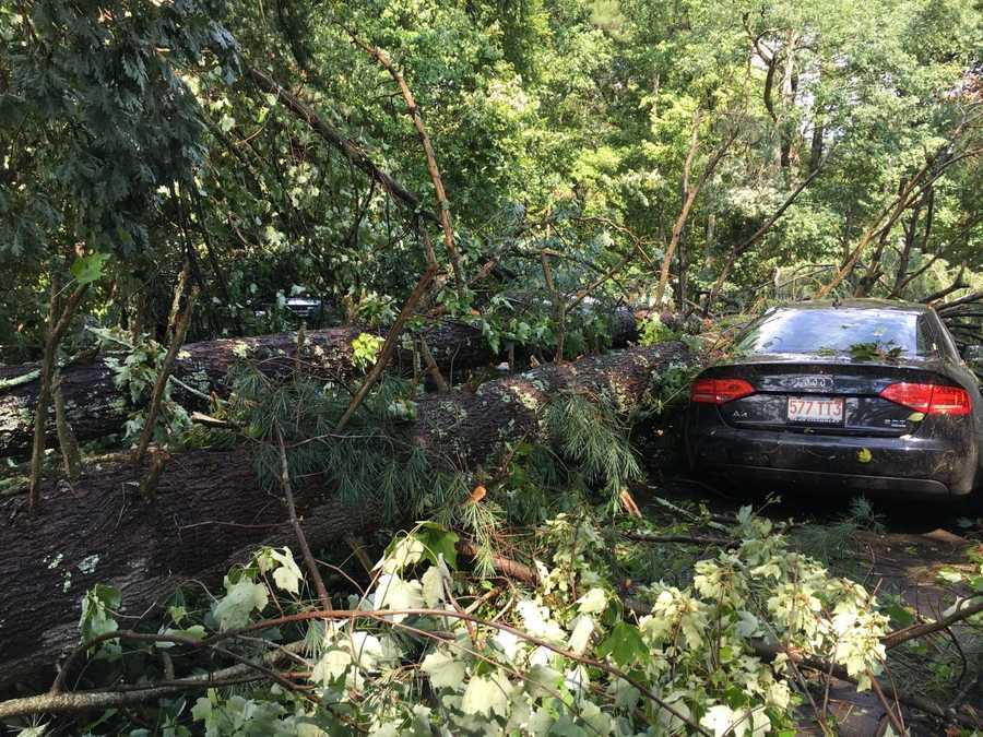 Tree damage in Groton
