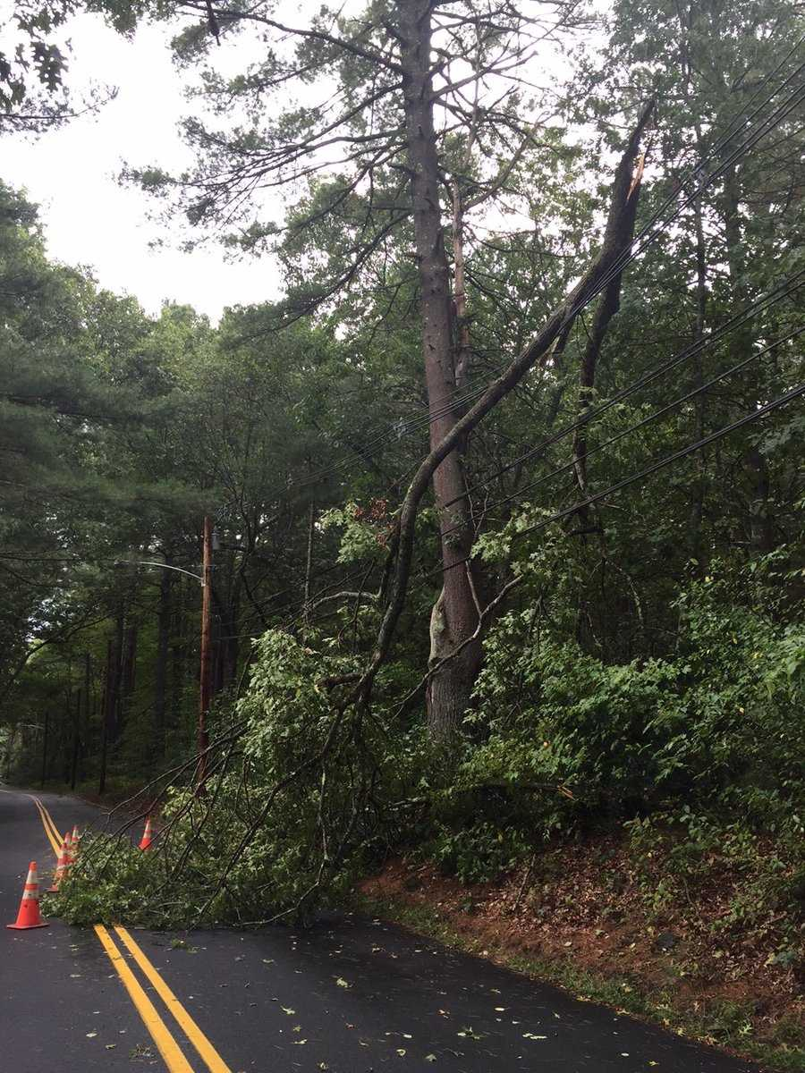 Trees down in Concord