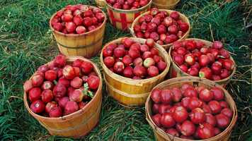 It's a New England favorite when fall arrives: apple picking. We recently asked our Facebook fans for the best place to pick apples in Massachusetts. Here's what they said....
