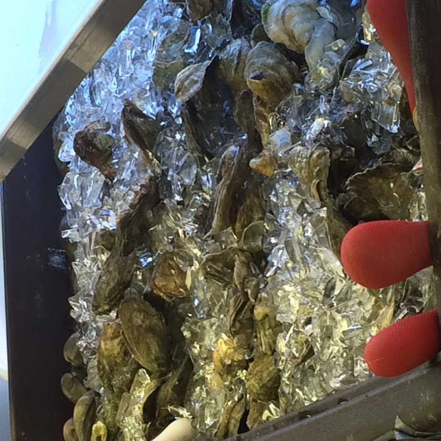 Fresh shucked oysters from Student Prince.