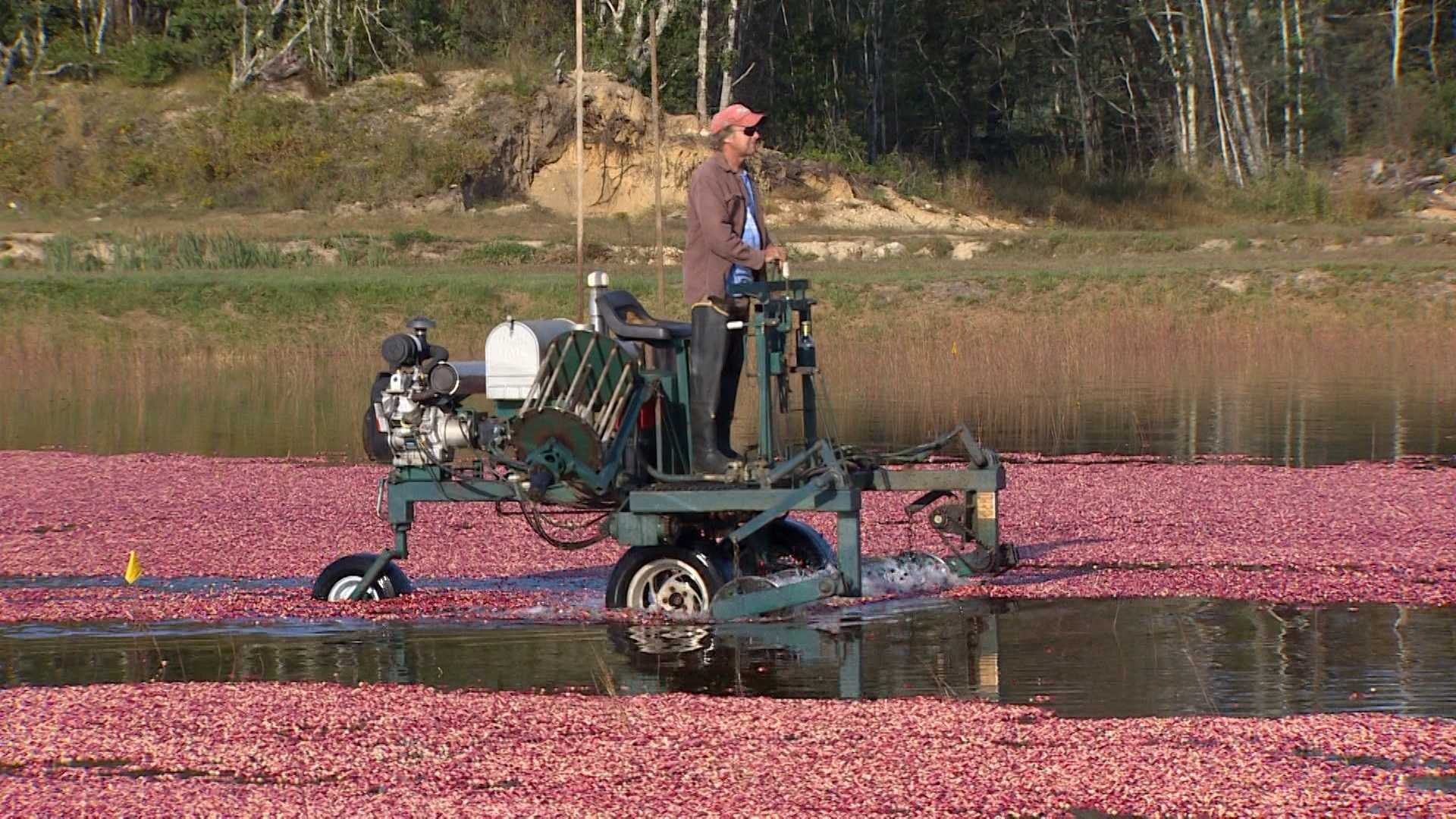 Monday, October 10: Main Streets and Back Roads: Cranberry Country