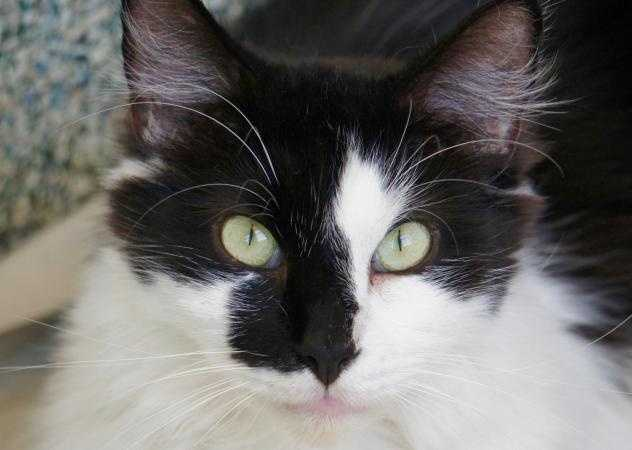 Hey There - My name is Dormouse. I am a 5 year old neutered male. I came in with a large group of cats all living in one home. I have a respiratory virus that can be contagious to other cats so I am hoping to be adopted with another cat who lived with me prior (my mates are Maryann, Pigeon, Puppy and Elsie - you can see their pictures online too!). If you don't have a cat and have been trying to fill that empty void now is your chance! I am best buds with all my cat friends here but I am shyer around people. MORE