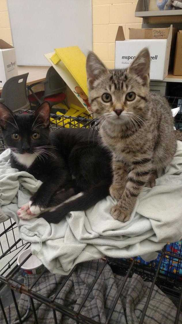 Meet these brothers from other mothers, Vince Noir and Howard Moon! Howard arrived after someone him under a bush. Vince came to the shelter with a hurt hip and needed to be put on something called 'cage rest.' The pair is bonded and should be placed together. MORE