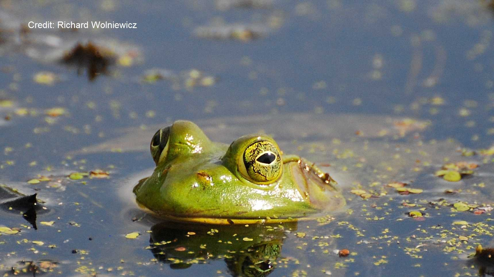 frog photo with credit.jpg