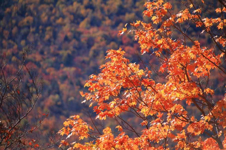 Hues of gold, yellow and orange are spilling down the mountainsides all across the region.
