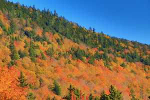 Bear Notch Road closes in the winter, so enjoy the drive, and the colors while they last.