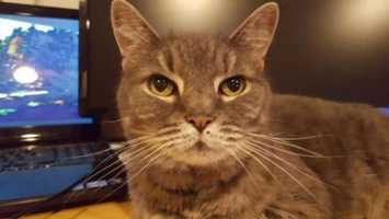 Jack is living at the Cape Cod adoption center in Centerville and is 14-years-old.