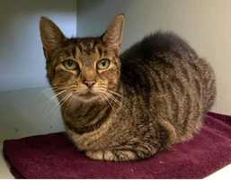 Josephina is living at the Cape Cod adoption center in Centerville and looking for a new home.