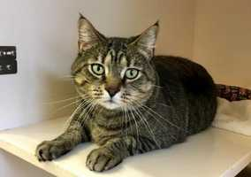 Prima is living at the Cape Cod adoption center in Centerville and is 2-years-old.