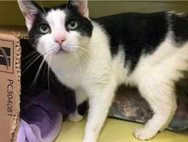 Benny is living at the Cape Cod adoption center in Centerville and is 11-years-old