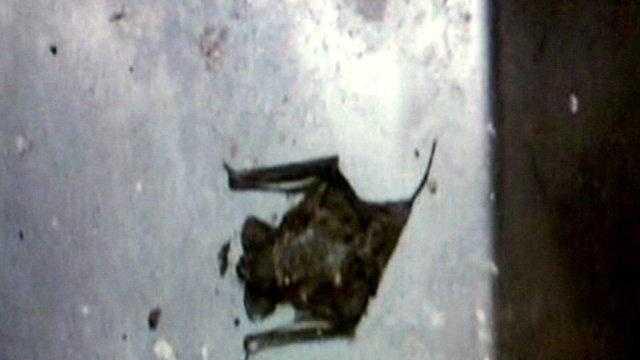 Bats at McDonogh 35 - 26564888