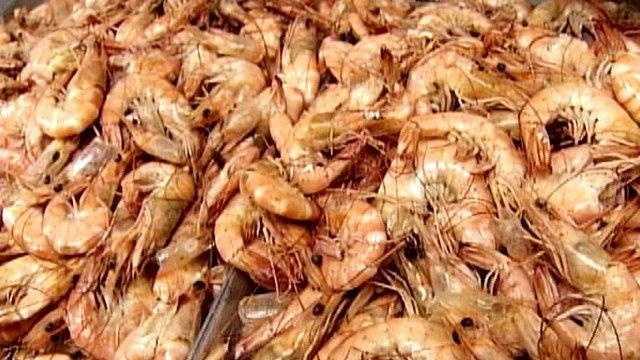 Shrimp - Generic - Image - 23454394