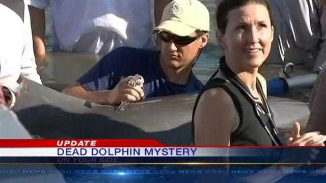 Scientists say chilly waters could be the reason behind the deaths of scores of dolphins.