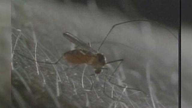 Health officials issue warning about mosquitoes