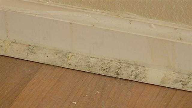 Homeowners and renters are trying to get rid of mold after Hurricane Isaac.