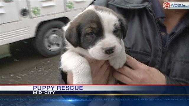 crews with the La. SPCA rescued puppies from underneath a Mid-City home.