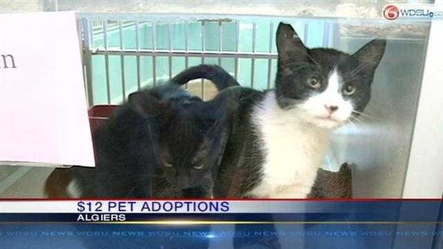 Today is Dec. 12, 2012, and at the LASPCA all cats and dogs are being adopted for only $12.